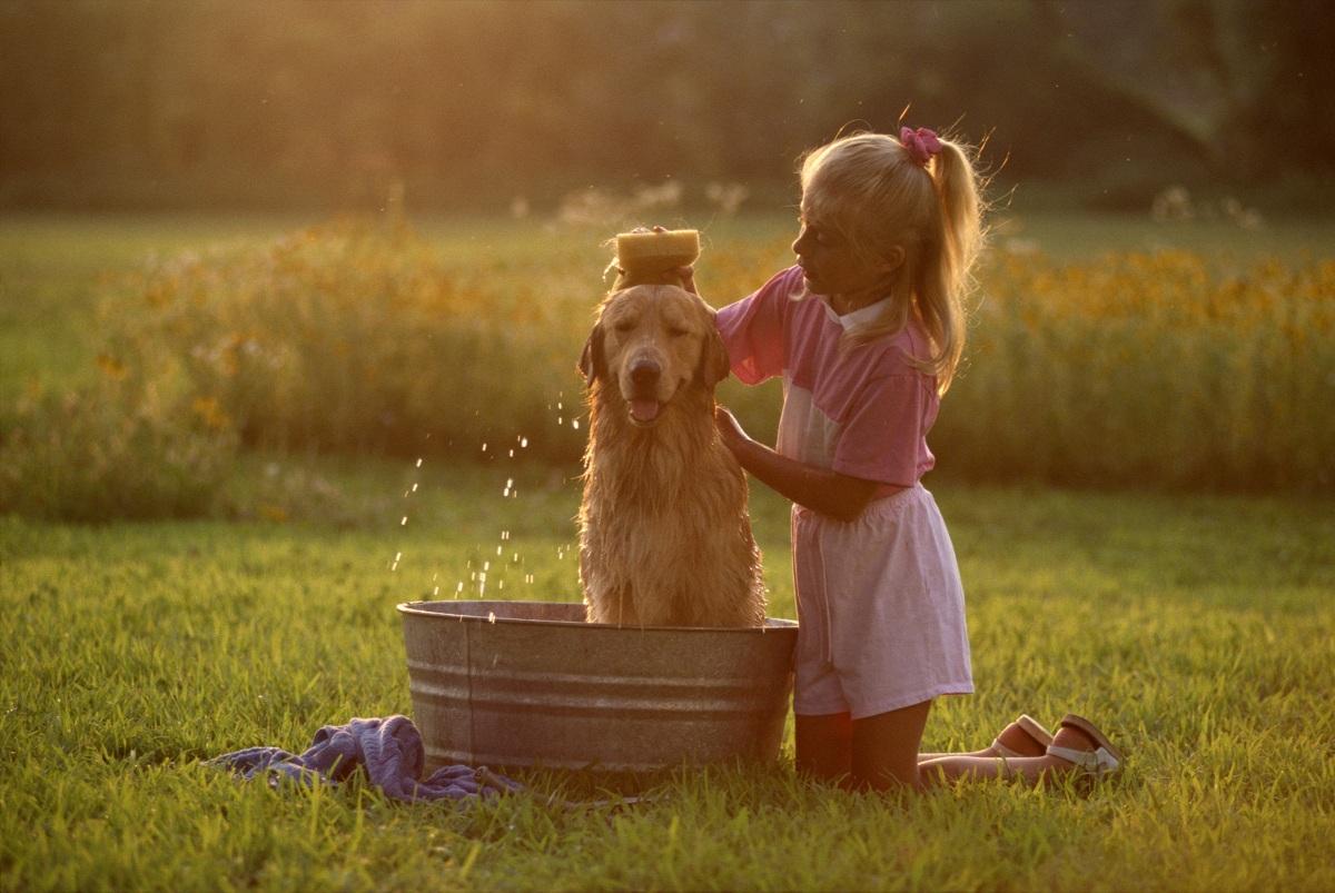 Estética canina, pasado y presente