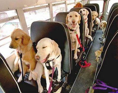 Piden que las mascotas viajen en bus público