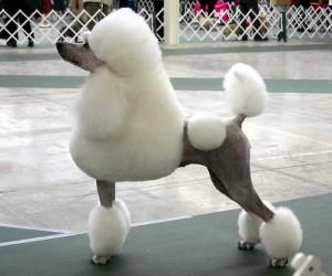 Estilistas de mascotas
