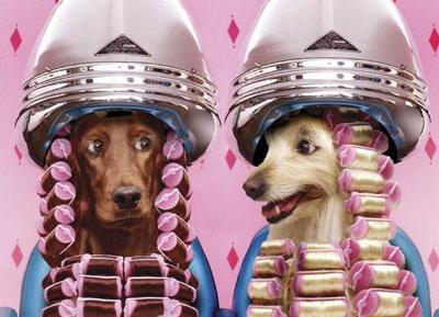 La peluquería canina tiene cada vez más demanda.